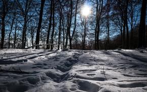 Картинка зима, снег, деревья, пейзаж, следы, природа, красота