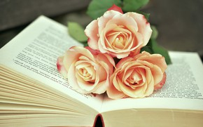 Картинка букет, Розы, бутоны