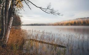 Обои осень, озеро, берёзы