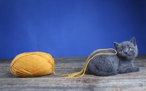 Картинка кошка, клубок, котенок, серый, доски, шерсть, малыш, лежит, котёнок, нитки, синий фон, нить, британский, пряжа, ...