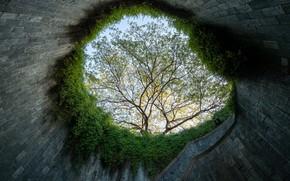 Картинка стена, круг, Дерево, лестница