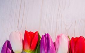 Картинка цветы, colorful, тюльпаны, red, white, wood, flowers, tulips, spring, purple