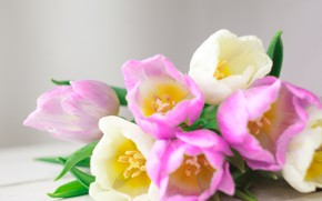 Картинка цветы, букет, тюльпаны, love, розовые, white, fresh, pink, flowers, romantic, tulips, spring