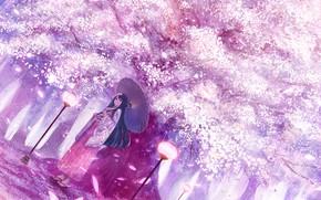Картинка девушка, весна, зонт, сад, сакура