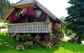Картинка коттедж, веранда, в цветах