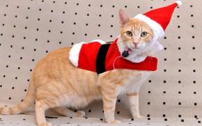 Картинка кошка, кот, фон, праздник, новый год, рождество, рыжий, костюм, санта, колпак, маскарад