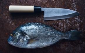 Картинка рыба, нож, Japanese style