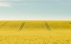 Картинка поле, небо, рапс