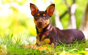 Картинка улыбка, фон, друг, щенок, травка, собачка