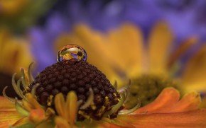 Картинка цветок, вода, макро, природа, капля