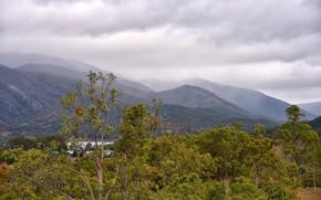 Картинка лес, небо, облака, деревья, горы, река, дома, долина, Австралия