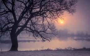 Картинка ночь, туман, река, дерево