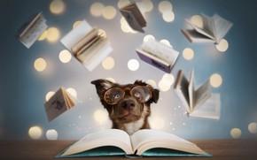 Картинка друг, книги, собака