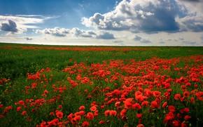 Картинка поле, лето, солнце, облака, цветы, маки, Россия