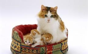 Картинка котята, мама, лежанка