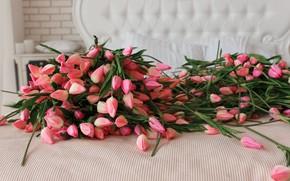 Картинка тюльпаны, розовые, бутоны, много