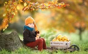 Картинка осень, листья, ветки, шапка, мальчик, сад, тележка, фрукты, ребёнок, айва, Baksza Daniel
