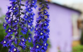 Картинка лето, цветы, фон