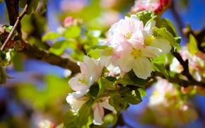 Картинка цветы, ветка, весна, цветение