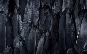 Картинка dark, black, feathers, textures, black wallpaper, 4k ultra hd background, black feathers