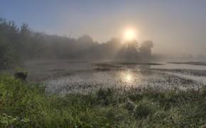 Картинка лес, лето, трава, солнце, свет, туман, озеро, рассвет, берег, болото, утро, раннее, водоем