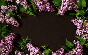 Картинка цветы, ветки, flowers, сирень, lilac, frame
