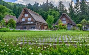 Картинка поле, домики, рис