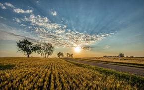 Картинка дорога, поле, небо, солнце, облака, деревья, закат, Северная Дакота