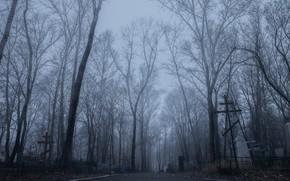 Картинка грусть, туман, кладбище, horror, депрессия, таинственность, тоска, fog, creep, загадочно, зловеще