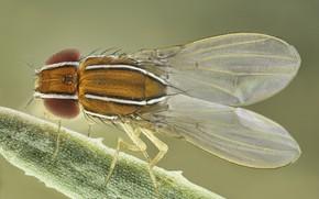 Картинка макро, муха, насекомое, крылышки, полосочки