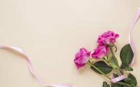 Картинка фон, розовый, розы, букет, лента