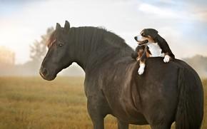 Картинка поле, язык, небо, взгляд, туман, конь, лошадь, собака, лежит, наездник, парочка, друзья, пёс, верхом