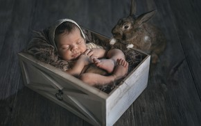 Картинка коробка, сон, кролик, малыш, милота