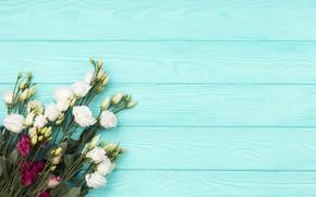 Картинка цветы, фон, голубой, букет, белая, эустома, бордовая