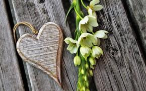 Картинка цветы, Праздник, сердечко, день влюбленных