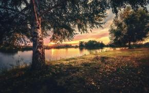 Картинка деревья, пейзаж, закат, природа, река, берёза
