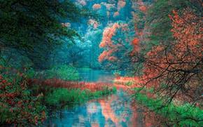 Картинка осень, лес, деревья, отражение, река, Bosnia, Босния