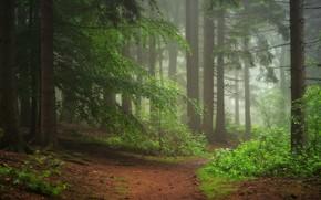 Картинка лес, деревья, Германия, тропинка
