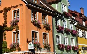 Картинка цветы, город, улица, окна, дома