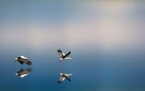 Картинка Вода, Природа, Отражение, Птица, Полет, Птицы, Крылья, Nature, Birds, Water, Flying, Bird, Reflection, Wings, Фауна, …