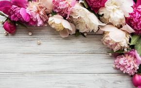 Картинка цветы, пионы, бусинки