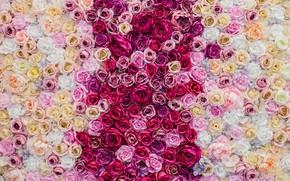 Картинка розы, Beautiful, бутоны, background, roses