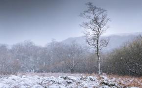 Картинка зима, иней, поле, небо, снег, деревья, дерево, лесополоса