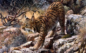 Картинка взгляд, ветки, природа, поза, камни, рисунок, картина, арт, живопись, рысь, Carl Brenders