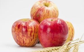 Картинка пшеница, яблоки, Apples