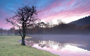 Картинка туман, озеро, дерево