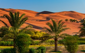 Картинка песок, небо, солнце, пальмы, пустыня, дюны, кусты, Abu Dhabi, ОАЭ
