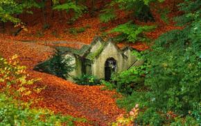 Картинка осень, лес, деревья, ручей, водопад, Нидерланды, Netherlands, опавшая листва, Oosterbeek, Oorsprongbeek, Остербек