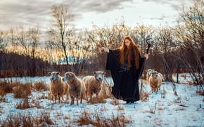 Картинка овцы, девушка, Samantha