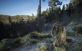 Картинка лес, пень, белка, хвост
